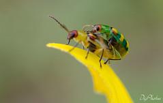 DSC_5244 (DigiPhotus) Tags: digiphotus macro macrodreams joaninha lagarta besouro brasileirinho aranha abelha bee esperança grilo barata caramujo