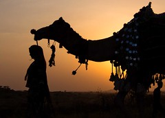 Camel fair III (Jhaví) Tags: camelfair pushkar rajasthan india incredibleindia camel camello sunset atardecer silhouettes siluetas contraluz travel viajar orange