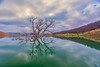 (Marc Crumpler (Ilikethenight)) Tags: usa california bayarea sfbayarea eastbay contracostacounty losvaqueros marccrumpler ccwd contracostawaterdistrict clouds sunrise reflection tree water hills canon canon6d 6d 24105mmf4lisusm