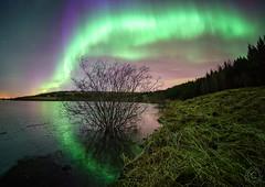 Hvaleyrarvatn (hrobertsson) Tags: aurora hvaleyrarvatn landscape rokinon12mm nature ilce7r sonyalpha iceland travel hafnarfjordur
