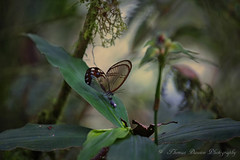The Magical Jungle - Risaralda, Colombia (Thomas J Dawson) Tags: santuariodeflorayfaunaotunquimbaya colombia naturereserve clearbutterfly jungle risaralda