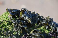 Iodine smells (Katy Wrathall) Tags: 2018 eastriding eastyokrshire england fraisthorpe january beach coast seaside winter