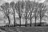 2018-02-04 Damme Brugge-2578-HDR-Edit.jpg (johandepoortere) Tags: workshop damme brugge landschap cityscape