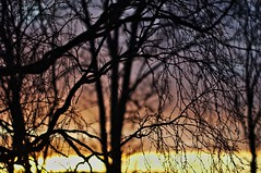 Sunset (Stefano Rugolo) Tags: stefanorugolo pentax k5 pentaxk5 vivitar80200mmf4macrofocusingzoommc branches sunset sky colors depthoffield light tree hälsingland sweden