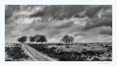 Stormclouds over the Veluwe ((Ruud) Reddingius) Tags: heathland veluwe holland gelderland terlet heide