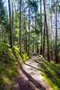 Waalweg Gais (Markus Lenz) Tags: fusgänger himmel landverkehr morgensonne naturlandschaft sonne sonnenstrahlen technik verkehr waalweg waldweg wanderweg weg