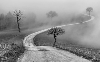 strada nella nebbia - San Severino Marche