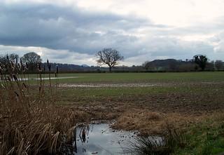 Wrekin In The Distance