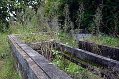 Tarban Creek Asylum 6 (PhillMono) Tags: australia new south wales sydney dslr nikon d7100 ruin relic abandoned overgrown tarban creek asylum urbex urban exploration old