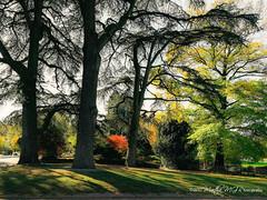 Le jardin botanique, Lyon (Martha MGR) Tags: lyon auvergnerhônealpes frança fr botanique jardinbotanique plantes trees colours outdoor autumn parque grama jardim árvore marthamgr
