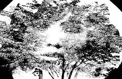 fashion portrait1 (Poli Maurizio) Tags: woman girl female sketch portrait drawing drawingportrait abstractportrait digitalportrait actress actor celebrity hollywood pencil coloredpencil pencilportrait freehand fine art sky blackandwhite color beauty water hair artist disegno ritratto schizzo manolibera occhi chiaroscuro matita dibujos fantasy fantastic facebook twitter linkedin pinterest instagram tumblr bouchac indoor outdoor italy baby sicily ocean sea sun snow clouds man barocco illustrazione naturalism background bed concept grey conceptart atmosferic watercolor technique surrealism 3dweddingpartyfamilytravelfriendsjapanvacationlondonbeachcaliforniabirthdaytripnycsummernatureitalyfrancemeparisartflowerssanfranciscoeuropechinaflowernewyorkwaterpeoplemusiccameraphone 3daustraliachristmasusaskygermanynewcanadanightcatholidayparkbwdogfoodsnowbabysunsetcitychicagospaintaiwanjulybluetokyoenglandmexicowinterportraitgreenred 3dpolimaurizioartworkredfunindiaarchitecturegardenmacrospringthailandukseattlefestivalconcertcanonhouseberlinhawaiistreetlakezoofloridajunemaywhitevancouverkidstreecloudstorontobarcelonageotaggedhome 3dbwbwdigitalseadaytexasscotlandcarlighthalloweencampingchurchanimalstreeswashingtonrivernikonaprilbostongirlirelandgraffitiamsterdamrocklandscapeblackandwhitecatsnewyorkcitysanromeroadtripurbanhoneymoonocean 3dwatercolorsnewzealandmarchblackmuseumyorkhikingislandmountainsyellowsydneysunhongkongshowgraduationcolorfilmmountainanimallosangelesschoolmoblogphotodogs 3dartdesigndisegnosiciliacalabriabasilicatacampaniamarcheabruzzomoliselaziotoscanaemiliaromagnalombardiavenetofriuliveneziagiuliapiemontevalledaostaliguriatrentinoaltoadigepuglia 3dlandscapepaesaggiolunasolemarenuvolecittàtramontoalbamontagnecollinenebbialuceautomobilearredamentointerniesterninaturamortacieloragazzadonnauomobambinofruttabarca 3dcanigattirinascimentomodelbarocconaturalismomattepaintingfuturismoastrattismocubismosurrealismorealismoiperealismoclassicismorococomanierismoromanticismo
