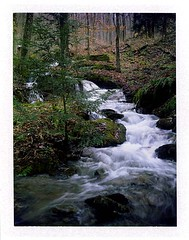 (babireley) Tags: polaroid250 fujifilmfp100c pawilds pottercounty pa pottercountypa lymanrunstatepark wildcathollow winter