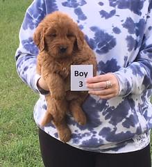Sophie Boy 3 pic 3 2-18
