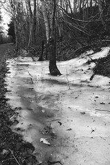 Frozen ditch (chrism229) Tags: olympusom2n zuiko28mmf2 ilfordxp2super iso1600 ilfordilfotechc hasselbladx1 film monochrome blackandwhite pushprocess