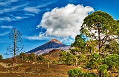 Teide16