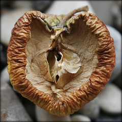apple heart (piktorio) Tags: berlin germany dried fruit food nature core apple wrinkled half decay time object piktorio