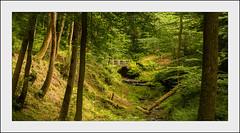 Woodland Dell(UK) (williamwalton001) Tags: pentaxart plants park borders bridge grasses green trees texture timber tones nationaltrust woodlands colourimage trolled greatphotographers