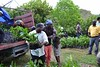 NEPA distributes 10,000 coffee suckers to St Thomas farmers (good news Jamaica) Tags: coffee nepa yallahsriver
