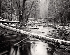Cold Jungle (tsiklonaut) Tags: pentax 6x7 67 film analog analogue analogica analoog 120 roll medium format ilford delta 100 pro black white negro y blanco mustvalge estonia estonian eesti landscape winter talv maastik taevaskoda ahja jõgi river fallen trees cold külm ilu travel discover experience drum scan drumscan scanner pmt forest wild nature loodus talvine rocky riverbed taevaskoja