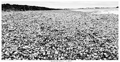"Desert of Shells (DerAblichter) Tags: esens niedersachsen deutschland de wangerland sw bw sea blackandwhite schwarzweis contrast kontrast water wasser northsea nordsee monochrome monochrom seashore colors mono art light summer winter people landschaft bright sky himmel hell dunkel strand beach white black kunst licht ""square format"" nature iphonegraphy europe travel square california canon london wedding china japan music concerts flowers portraits weddings fashion"