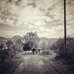 A farmer and his wife herding their sheep (VillaRhapsody) Tags: winter landscape rural village kayaköy fethiye foggy sunrise dawn shepherd people behind sepia monochrome sheep road cy2 challengeyouwinner