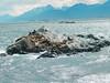 . (► ► www.giselas.com.ar ◄ ◄) Tags: patagonia verano 2018 lobos marinos fauna faro les eclaireurs