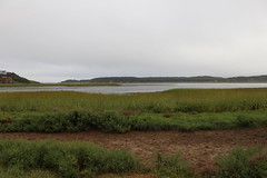 Salt Pond Trail (robincagey) Tags: capecod massachusetts nature newengland eastham