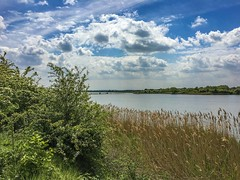 Through the reeds (Just landscapes) Tags: essex heybridgebasin england uk iphone6s iphone scenery scenic countryside outside rural paysage waterscape landscape water lakeside lakeview lake reeds