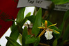 AOS 1.2018-3 (Jordan Cataldo) Tags: aos american orchid society st paul mn winter carnival