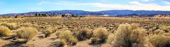 Tumbleweed Ranch (Joe Lach) Tags: tumbleweedranch tumbleweedfarm pacificcresttrail threepoints mojavedesert mohavedesert antelopevalley california yellow blue green mountains sky joelach
