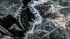 hoarfrost (Alta Alteo) Tags: raureif hoarfrost wiese laub efeu garten frost eis eiskristalle