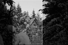 snow in black'n'white VIII (cyberjani) Tags: rakitna slovenia winter snow forest tree bw