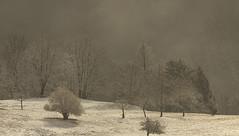 Parfois un pâle rayon de soleil (mrieffly) Tags: htrhin hautesvosges neige alsace brouillard