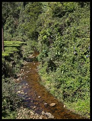Forest Stream (Indianature st2i) Tags: valparai anamalais anamallais anamalaitigerreserve westernghats tea shola rainforest nature indianature 2018 january february tamilnadu india life wildlife plantation forest people estate
