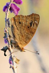 Delicate Wonder (dianne_stankiewicz) Tags: wings delicate butterfly nature wildlife insect plant