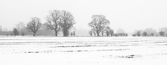 Paytoe Field 2 (rowteight) Tags: winter herefordshire england europe places snow