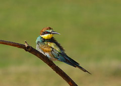 Posing (Baubec Izzet) Tags: baubecizzet pentax birds nature flickrunitedaward