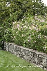 Longwood Gardens Spring 2017 (4) (Framemaker 2014) Tags: longwood gardens kennett square pennsylvania tulips united states america