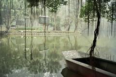 Idyllic (InSoManyWords) Tags: film fujisuperia200 fujifilm rollei35 35mm hanoi vietnam mist