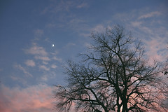 The Crescent Moon, Pastel Skies, & Your Eyes Pt. I (Miss Marisa Renee) Tags: marisarenee mywork canon digital digitalphotography 2017 november2017 november sky moon crescent sunset pink blue cyan pastel clouds cloudy colorado tree trees silhouette silhouetted canon5dmarkii broomfield