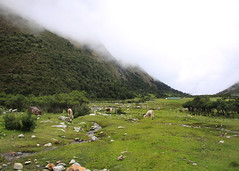 IMG_3496 (noemislee) Tags: peru cusco december 2017 travel trip noemislee noemí slee noemi tatiana vanessa ximena sánchez mendoza nature green grass naturaleza landscape paisaje montaña mountain humantay trekking hiking senderismo fog niebla