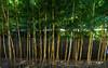 Exterior view of Nezu Museum (根津美術館) (christinayan01 (busy)) Tags: museum nezu tokyo japan kengo kuma building architecture perspective bamboo