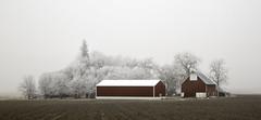 down on the farm (eDDie_TK) Tags: colorado co weldcountyco berthoudco johnstownco farming farms farm rural rurallife ruralliving fog coloradoseasternplains coloradosfrontrange