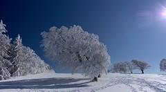 Black Forest (SaBi BeK) Tags: winter berge frost schwarzwald black forest freiburg winterlandschaft blauer himmel sonnenschein