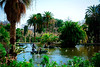 Parc de la Ciutadella (Fnikos) Tags: park parc parco parque lake water people boat tree palmtree duck nature outdoor