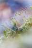 Moos (Petra Runge) Tags: bokeh detail natur moos nahaufnahme nature moss close up