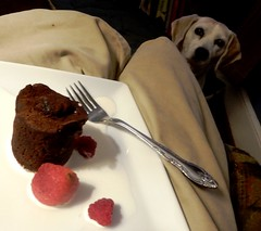 desire (Just Back) Tags: chocolate fruit dessert dog beagle face love desire plate raspberry juice taste delicious sweet wonderful valentine birthday sweetheart dinner eat food cream strawberry crumbs cocoa