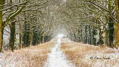 Opposite, #Thornton Manor (davenewby123) Tags: thorntonmanor