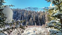 A little mountain meadow (altamons) Tags: xcountry winterland winter white snow skiing ski rockies canadianrockies rockymountains rocky mountains mountain canadian canada altamons banffnationalpark banff alberta cascade cascademountain