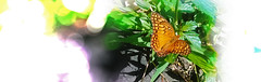 Butterfly Days 1/4 (Guilherme Alex) Tags: butterfly garden bokeh blur cutout life wild natural orange wings beatiful leafs light brightness day perspective love mylife cellphone samsung